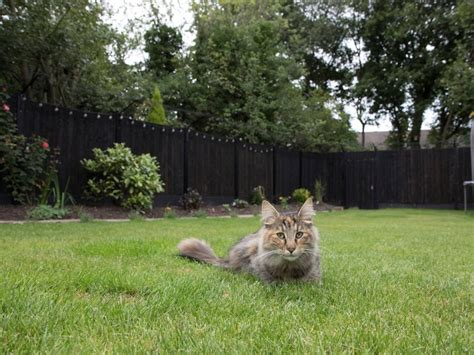 5 Ways to Stop Cats from Escaping the Garden