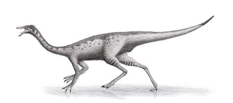 Anserimimus Pictures & Facts - The Dinosaur Database