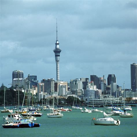 Top Cities in New Zealand for Dog Lovers