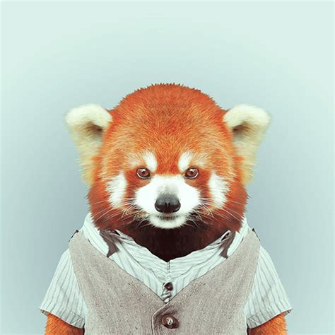 Hilarious Portraits Of Zoo Animals Wearing Fashionable