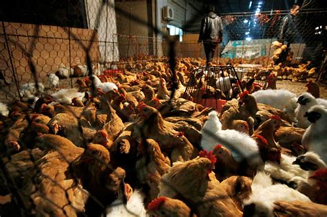 China reports world's first human case of H7N4 bird flu